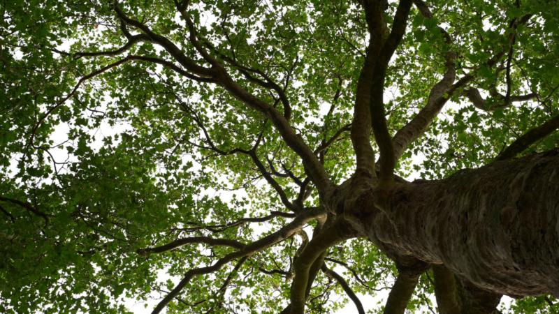 """""""Hello again, tree"""""""